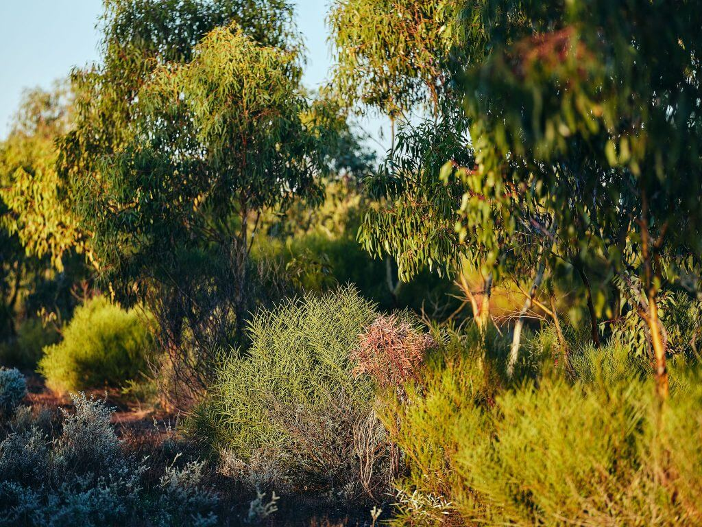 Carbon Neutral has restored over 14 hectares of land by planting more than 30 million native trees and shrubs!